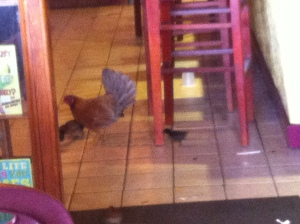 hen in restaurant