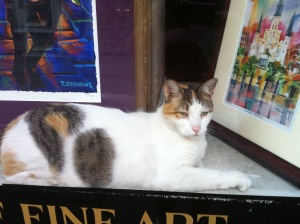 Cat in antique shop