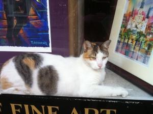 Cat in antique shop