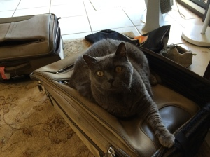 Raphaella on suitcase