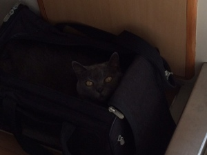 Raphaella hiding