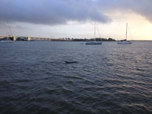 dolphins ft pierce