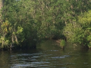 Waccamaw River Anchorage