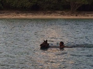 Race Horses swimming